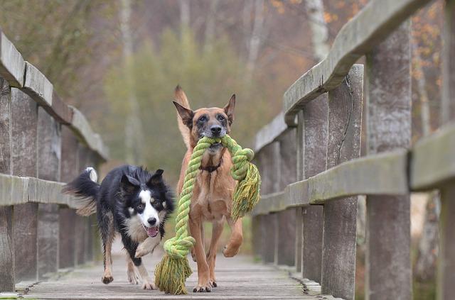 Hunde Gassi führen